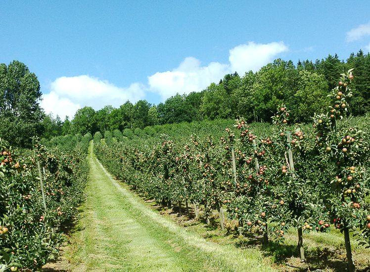 Amazing farms utvalda must från äppeldalen